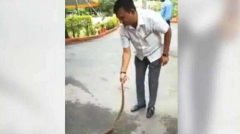 In the video, shot by one of his staff members, Dhanani can be seen holding the snake by its tail. (Photo: Facebook | Paresh Dhanani)