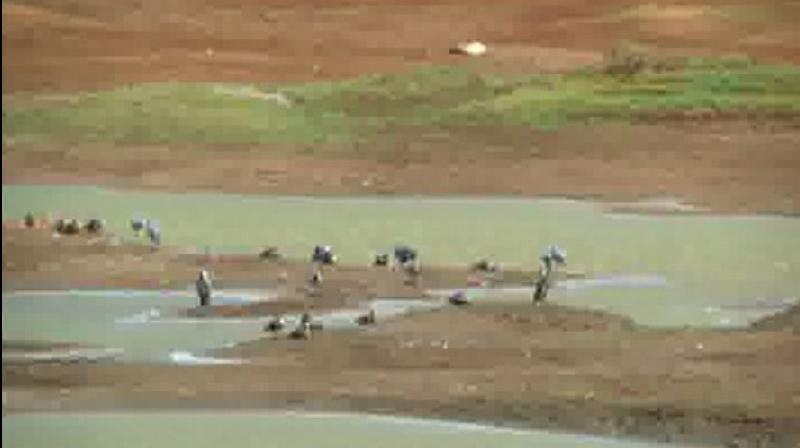 Due to the heatwave in Coimbatore, more than 10 out of 20 tanks around the city have become dry. (Photo: ANI)