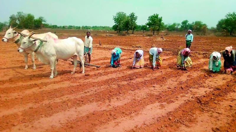 The districts have named this kharif as 'second summer' with temperatures fluctuating between 35 and 40 degrees. (Representational Image)
