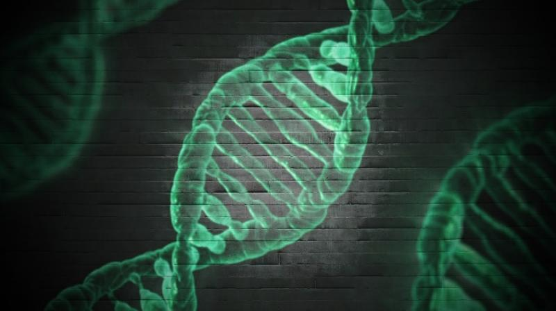 'Jumping genes' key to evolution, researchers reveal. (Photo: Pixabay)
