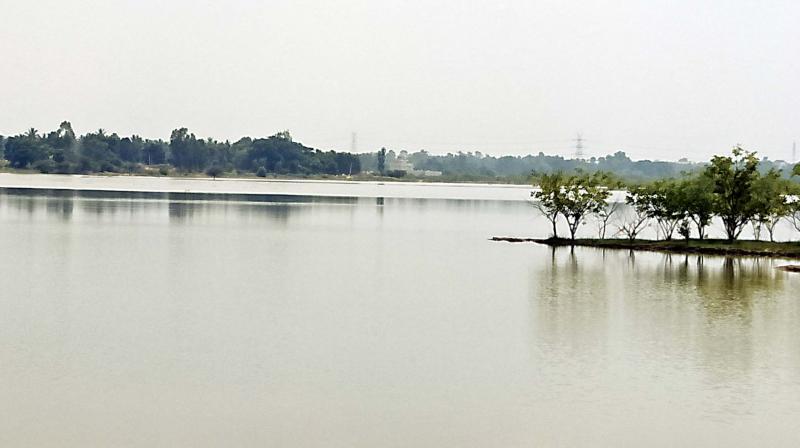 A rejuvenated Mahadeva Kodigehalli Lake