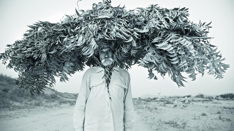 Leafy headgear
