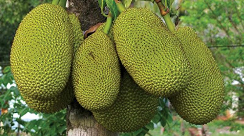 The search for a cocoa substitute was motivated by the rise in international demand for cocoa.