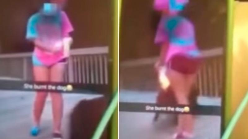 Teen filmed setting dog on fire. (Photo: Youtube)