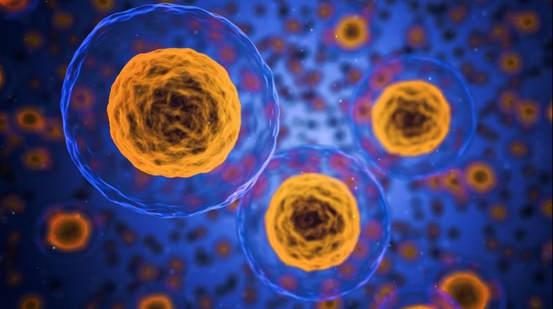 Recent discoveries have shown that some cellular compartments don't have membranes, which were previously seen as necessary to hold a cell together. (Photo: Representational/Pixabay)