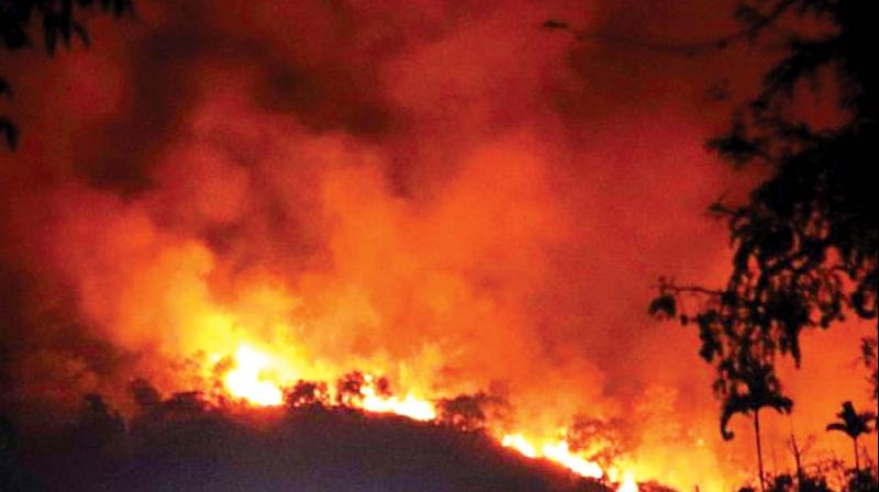 Trekkers blamed for Tamil Nadu forest fire tragedy