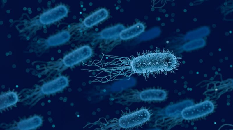 Understanding how Gram-negative bacteria interact with each other can help in controlling high-risk infections. (Photo: Representational/Pixabay)