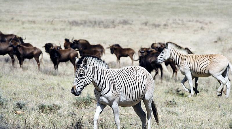 Meanwhile the revelations made by this research can help with conservation efforts (Photo: AFP)