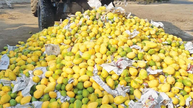 Officials of the Food Safety and Standards Authority of India (FSSAI) and Market Management Committee (MMC)  inspecting fruit shops in Koyambedu, in a bid to stop the practice of use of ethylene sachets by  vendors for ripening of fruits (Photo - DC)