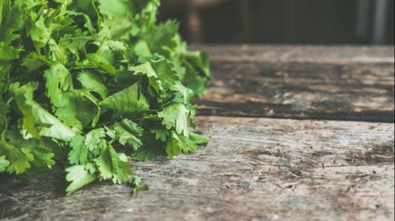 Coriander can be stored in zip bags that prevent moisture loss. (Photo: Representational/Pexels)