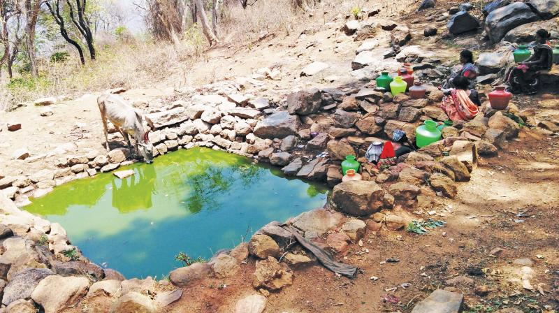 Youth guard a small pond to deprive jumbos of their water hole in Krishnagiri village. (Photo: DC)