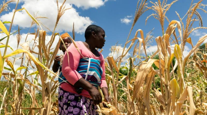 Political polarisation, economic and financial problems and erratic climatic conditions all contribute to the storm of food insecurity currently facing a country once seen as the breadbasket of Africa. (Photo: AFP)