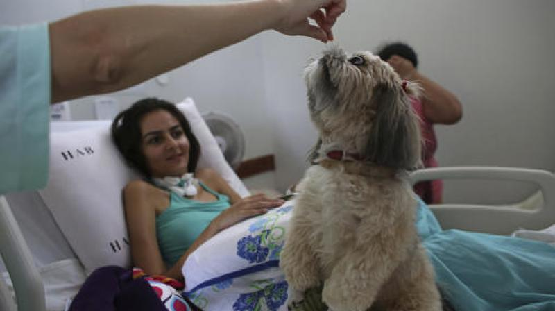 Each week, patients at the Support Hospital of Brasilia receive visits from a special breed of therapist: dogs trained to help them recover from disease or injury. (Photo: AP)