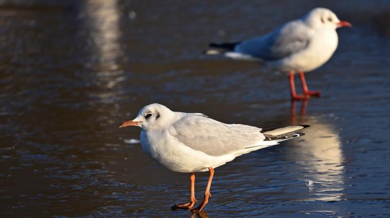 South Africa detects avian flu in seabirds. (Photo: Pixabay)