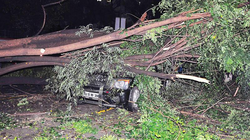 A huge tree fell on a vehicle in front of the DG office on Nrupatunga Road due to heavy rains in Bengaluru on Saturday. The driver and the owner escaped unhurt. (Photo: Satish B)