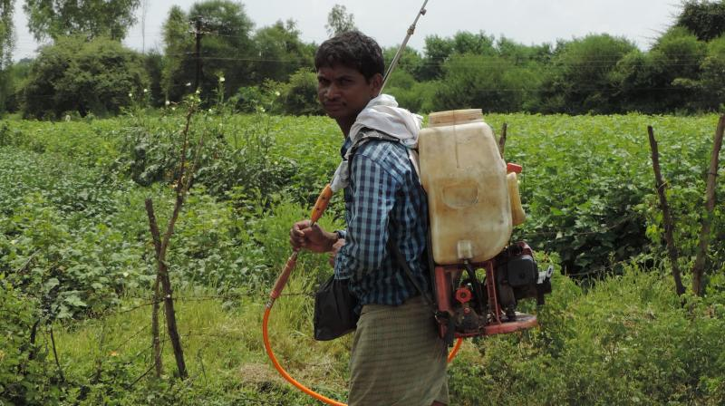 Farmer spray pesticide in their farms at Girnur village in Adilabad district on Tuesday.  (Photo: DC)