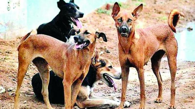 The dog menace in the city is so severe that, on an average, 20 to 30 patients arrive at the government hospital to get anti-rabies vaccine suffering dog bite every day.