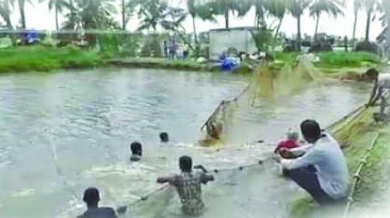 The total area of legalised aquaculture in North Andhra is 1,200 hectares.