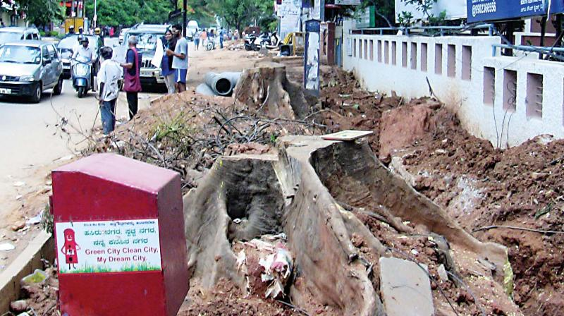 Over the last two years, at least a 1,000 trees have been felled due to the construction of drains.