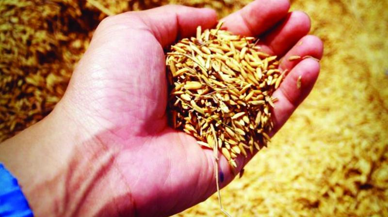 Seed saving is seen as a problem by the agrichemical industry, which started out as a war industry and is now genetically modifying itself into biotechnology and the so-called life sciences industry.