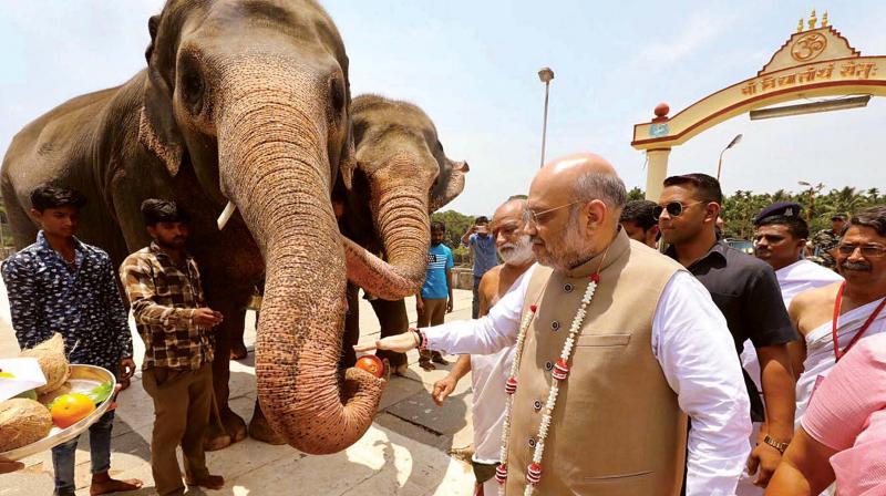 BJP President Amit Shah feeding the elephant at Sringeri Math on Tuesday. (Photo: KPN )