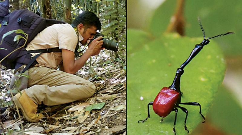 Shravan Regret Iyer films giraffe-necked weevil at a tropical rainforest in Madagascar.