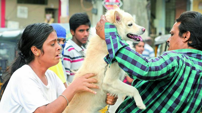 Owners bring their pets for vaccination on the World Zoonosis Day. (Photo: DC)
