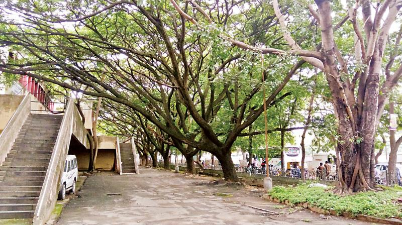Online petition against move to chop 200 trees at Indiranagar