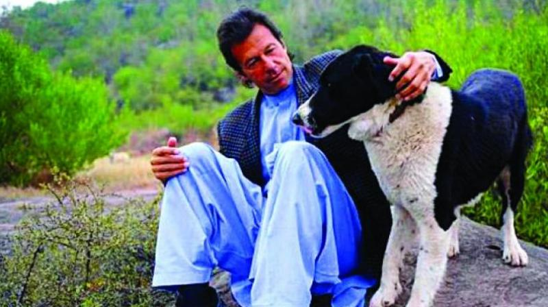 Over the years, Imran Khan's pet dogs have attracted press attention on multiple occasions. (Photo: File)