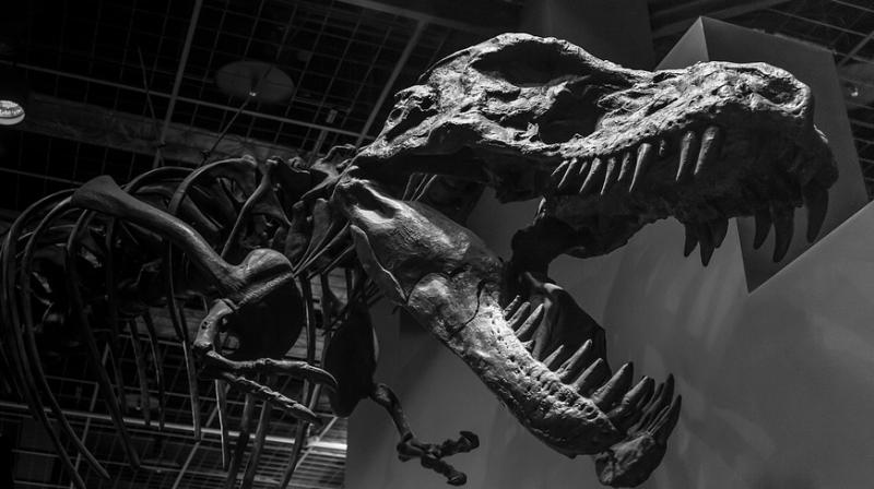 CT scans reveal the secrets of a 200-million-year-old dinosaur