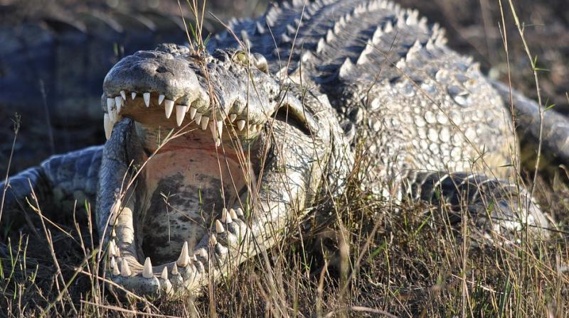 Couple marry in Zim hospital days after serious croc attack