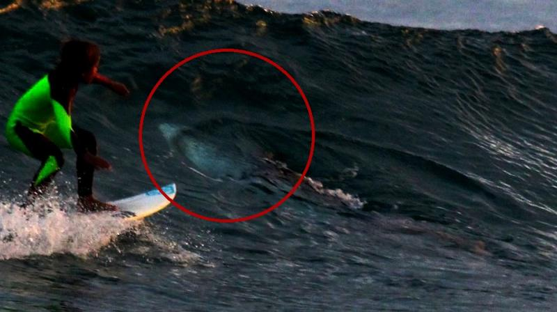 From the angle, it looks like the shark was spooked and is rolling away from the board to escape it (Photo: Facebook)