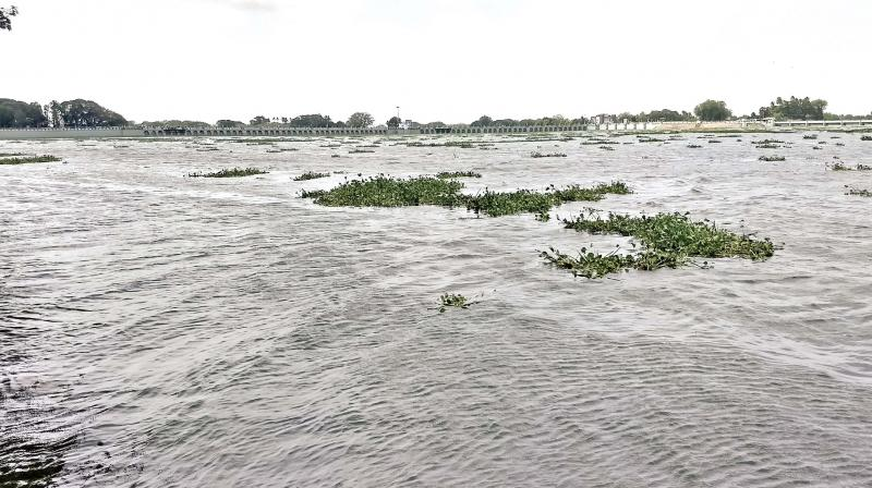 Tamil Nadu Chief Minister Edappadi K. Palaniswami has said that nearly 700 lakes and ponds will be filled up.