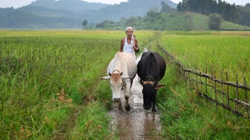 Agriculture karnataka