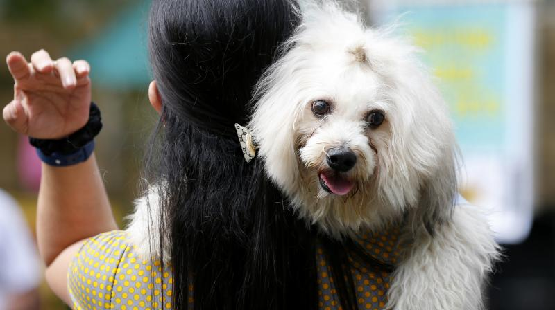 Homeless animals typically face cruelty or even extermination on the streets of the city. (Photo: Representational Image/ AP)