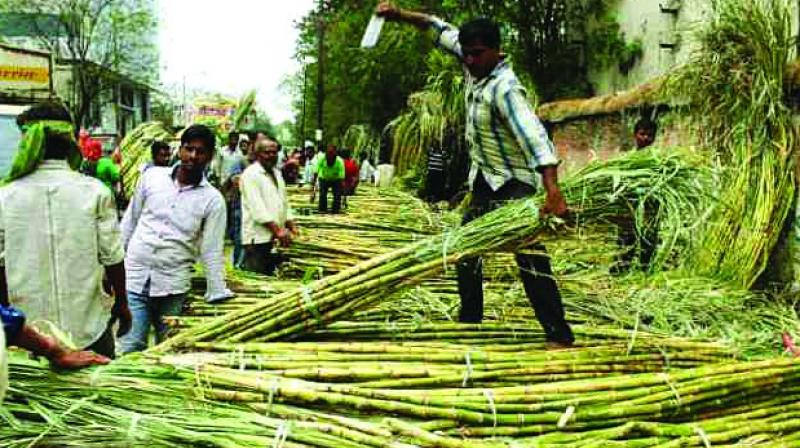 Thiru Arooran Sugars had to severely slash production due to non-availability of sugar cane at its factories.