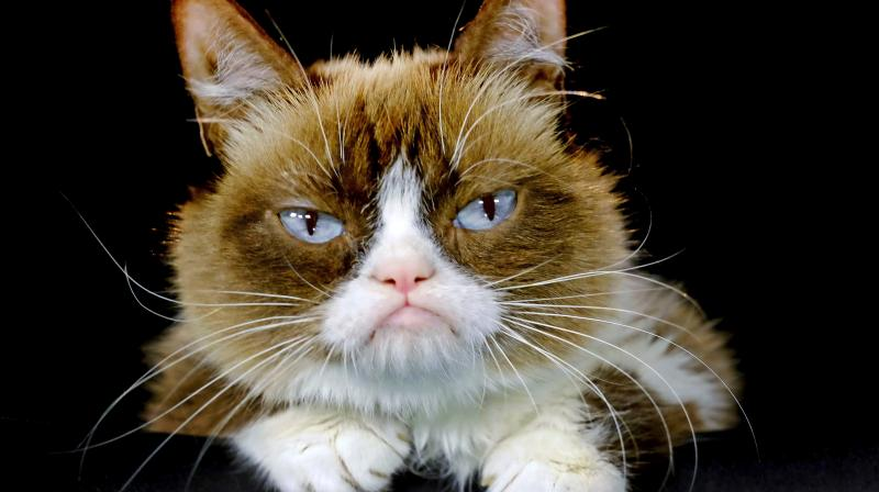 According to her owners 'Grumpy Cat' helped millions of people smile all around the world, even when times were tough. (Photo: AP)
