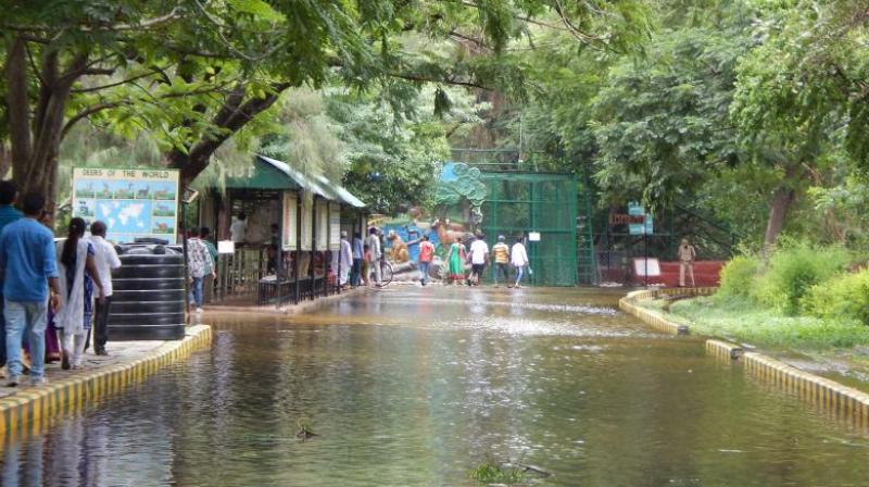 Hyderabad Nehru Zoological Park Closed Gets Ready For Rains