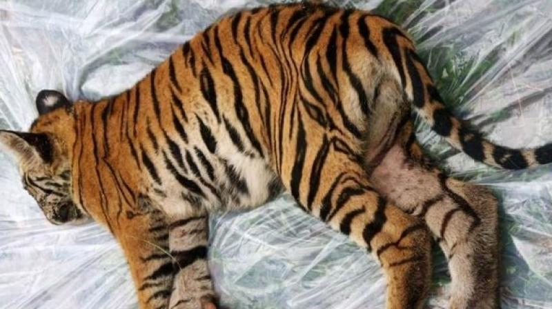 The cub, that died late Friday night, was undergoing treatment for the past week. (Photo: ANI)