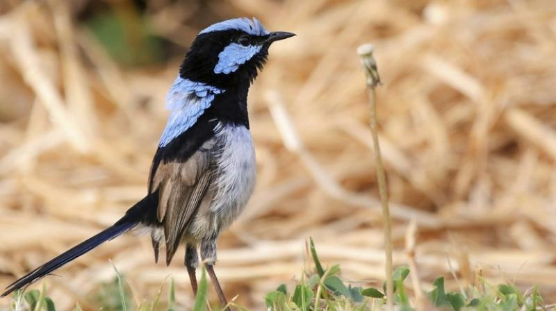 Birds have several ways of acquiring life skills.(Photo:AP)