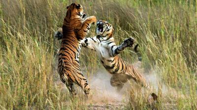 wildlife photography deccan chronicle