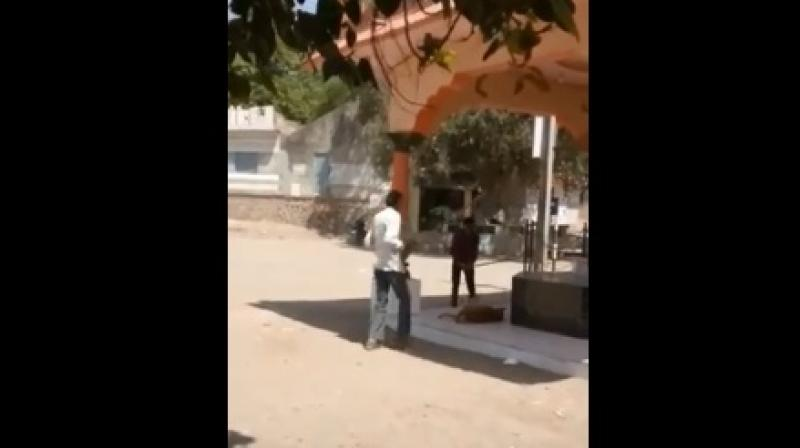 Watch: Men ruthlessly beat dog to death in Gujarat, FIR