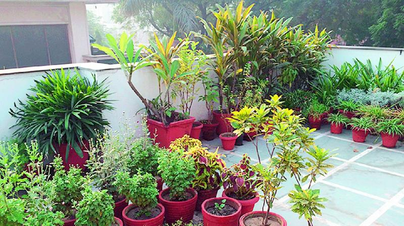 With Apartment Owners Not Allowing Tenants To Go For Terrace Gardening In Vizag City The