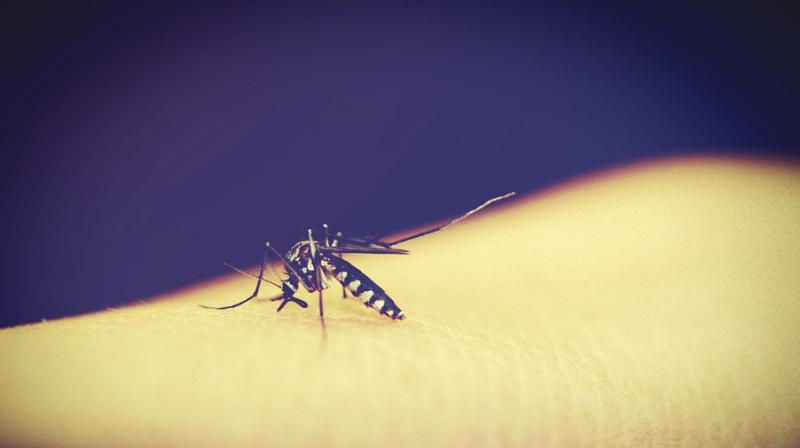 Experts warn dengue is becoming a growing issue worldwide. (Photo: Pixabay)
