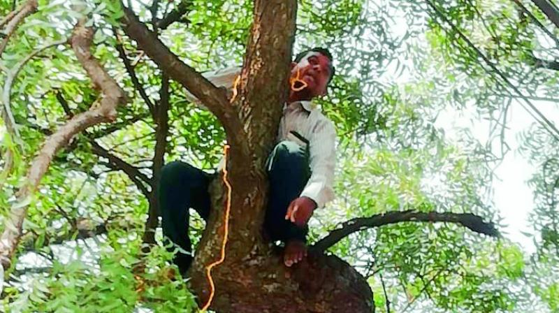 Ankam Gangadhar on a tree at the collectorate in Nizamabad on Monday.