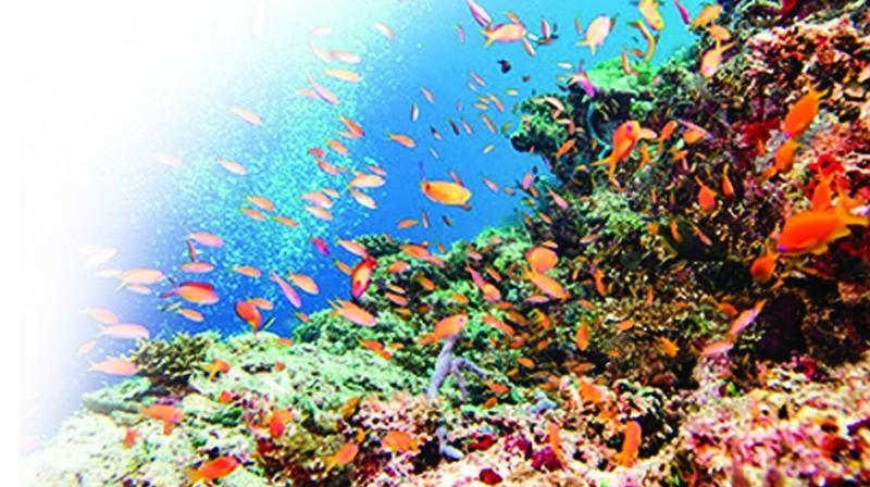 Coral reefs make up  less than one per cent of Earth's marine  environment, but are home to an estimated 25 per cent  of ocean life, acting as nurseries for many species of fish.