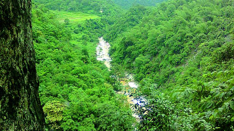 All protected areas in the state including the Amrabad tiger reserve, the Kawal tiger reserve and other wild life sanctuaries, cover about 2493 grids.