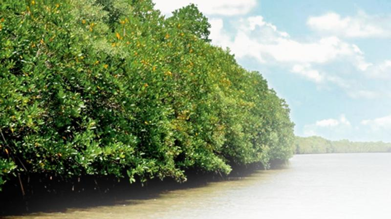 Once Godavari mangroves get such status, it becomes a place of  prominence and tourism at global level will be developed.