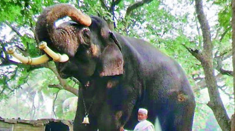 The Shia community is urging the government to allow two elephants for the procession to revive the old tradition and is ready to bear the expenses of one elephant.