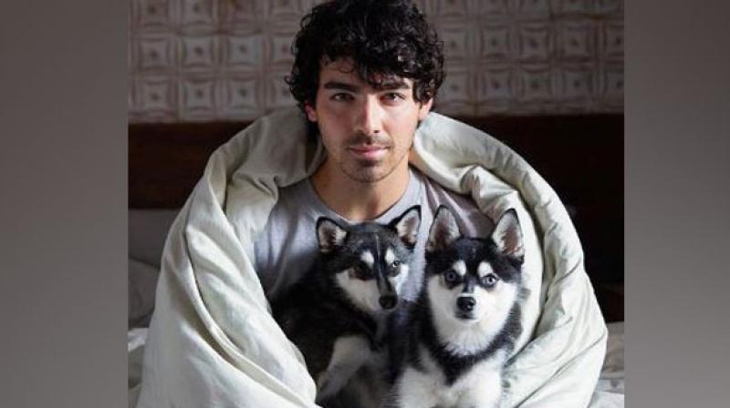 Joe Jonas & Sophie Turner's Dog Killed in ''Freak Accident''